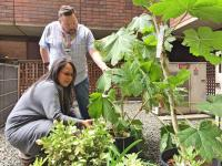 Lavita Trimble and Neil Fowler look at the devils club plant in the new medicinal garden at St. Paul's.